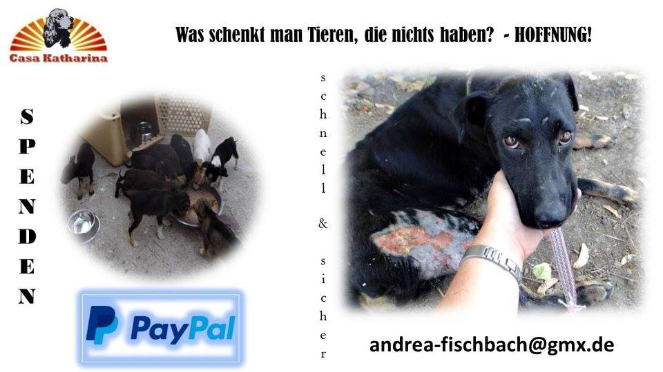 Paypal-5456364_n