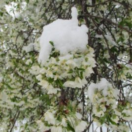 Casa-Schnee-5326_o
