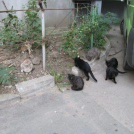 Cats-f-724244_o
