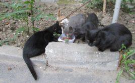 Cats-f-95860592_o